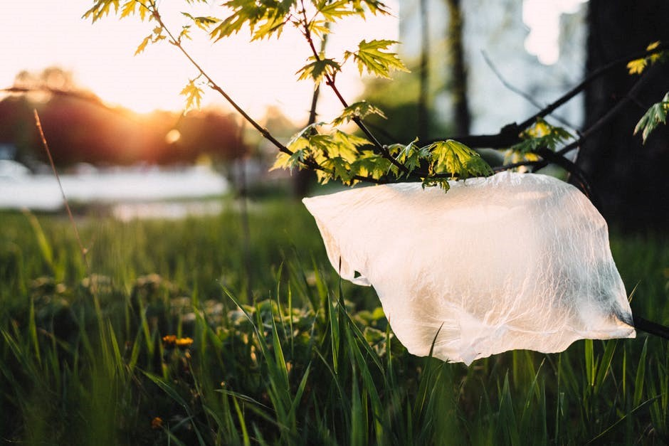 Biodegradable and compostable film: a quick guide | Network