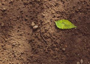compostable packaging soil
